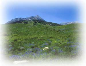 mt. crested butte in summer