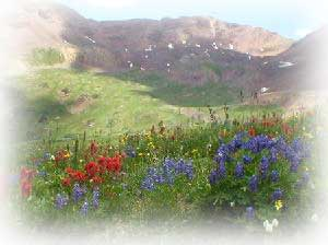 flowers in the mountains in crested butte in summer