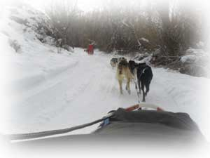 crested butte dogsledding in crested butte in winter